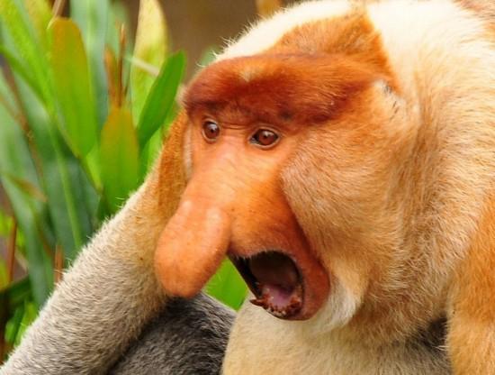世界最丑陋的动物大比拼
