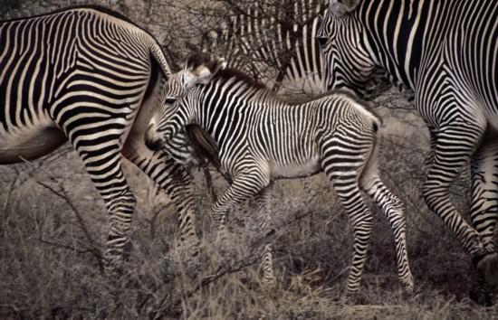 动物壮观大迁徙:大自然最独特景观(图)