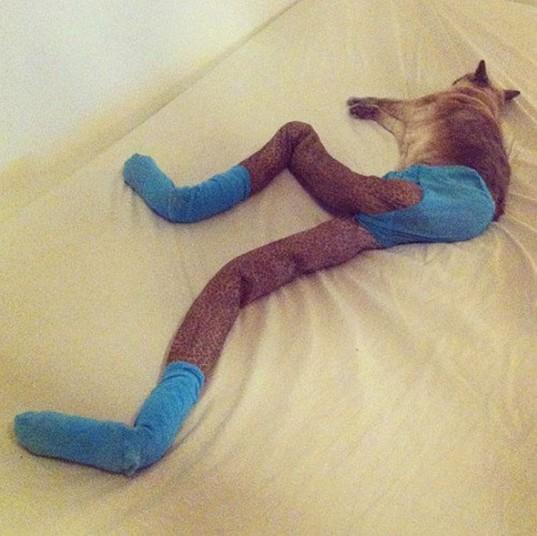 爆笑恶搞!如果给猫穿上紧身衣