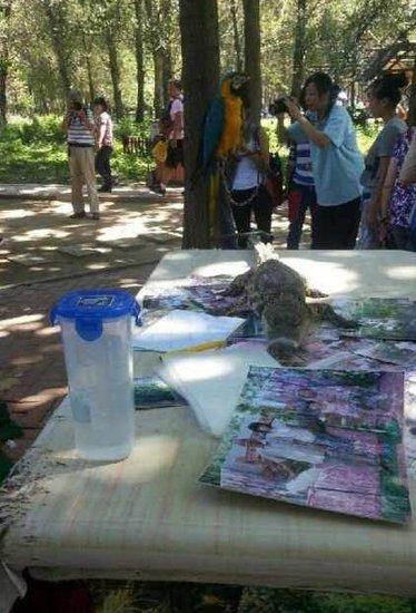 北京野生动物园被指虐待动物