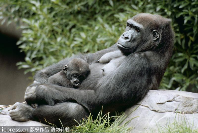 动物母爱浓情令人动容