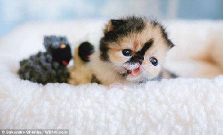 上最萌猫咪(图); 世界上最萌的小猫咪_最萌小猫咪,世界上最萌的