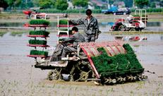 秀洲:水稻機械化育插秧現場會推廣機插秧