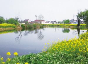 秀洲重繪水鄉和諧美景