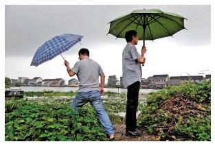 秀洲:鎮村兩級幹部冒雨巡查 守護東荷村