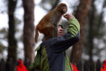 """云南野生动物园""""萌猴""""迎""""猴年"""""""