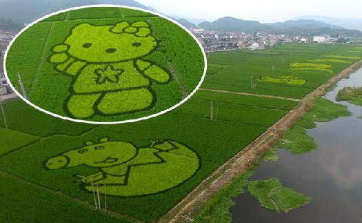 裘村创意稻田画:熊大、小猪佩奇都来了