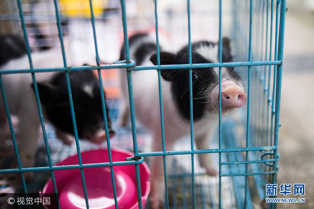 杭州:另類寵物千奇百怪 多為外來物種要慎養