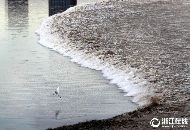杭州:农历七月初 又到看潮季