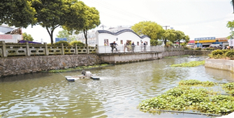 北仑新碶:个性化治劣水 又见鱼跃鸟飞