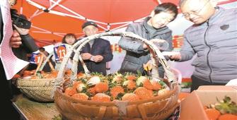 尚田草莓文化节火热开幕