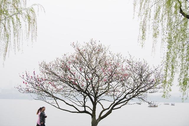 杭州西湖:桃红柳绿