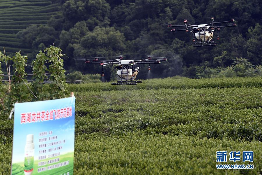杭州西湖龙井茶园实施无人机飞防植保