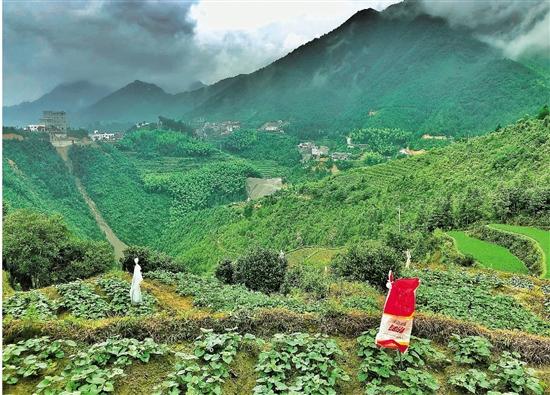 遂昌柘岱口乡特色农产品的创富之路 一根番薯条撬动千万大产业
