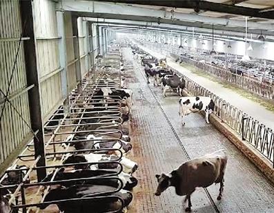 浙江畜牧業打造綠色發展新格局