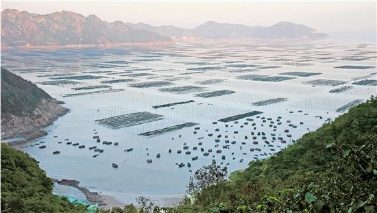 """承包海洋,像一个杠杆,撬动了渔村振兴、生态保护——苍南""""海改""""两年间"""