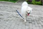 江干区试点文明遛犬区 只要犬主守住文明底线 遛狗时间不再受限