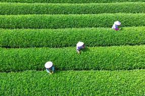 美麗中國之大木山騎行茶園