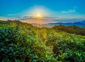 """2019版""""中国茶产业杭州指数""""发布 西湖边论茶数据里看行情"""
