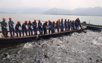 千岛湖再次上演巨网捕鱼