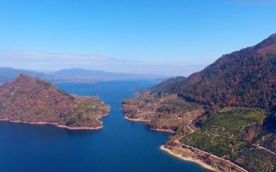 無人機看淳安——航拍大墅千畝茶山、桔林