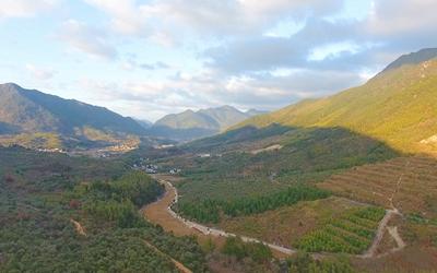 無人機看chuang)景mdash;—白(bai)馬(ma)村的銀杏樹