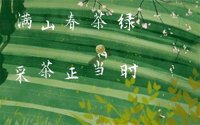 滿(man)山(shan)春茶綠 采茶正當(dang)時(shi)