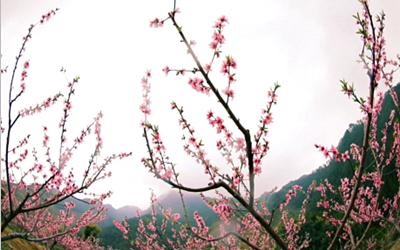 这片桃花林,惊艳了春天