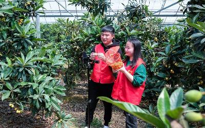 志愿者助力乡村农场采收水果