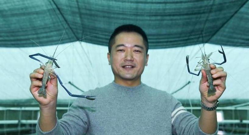 浙江湖州:沼虾保种忙