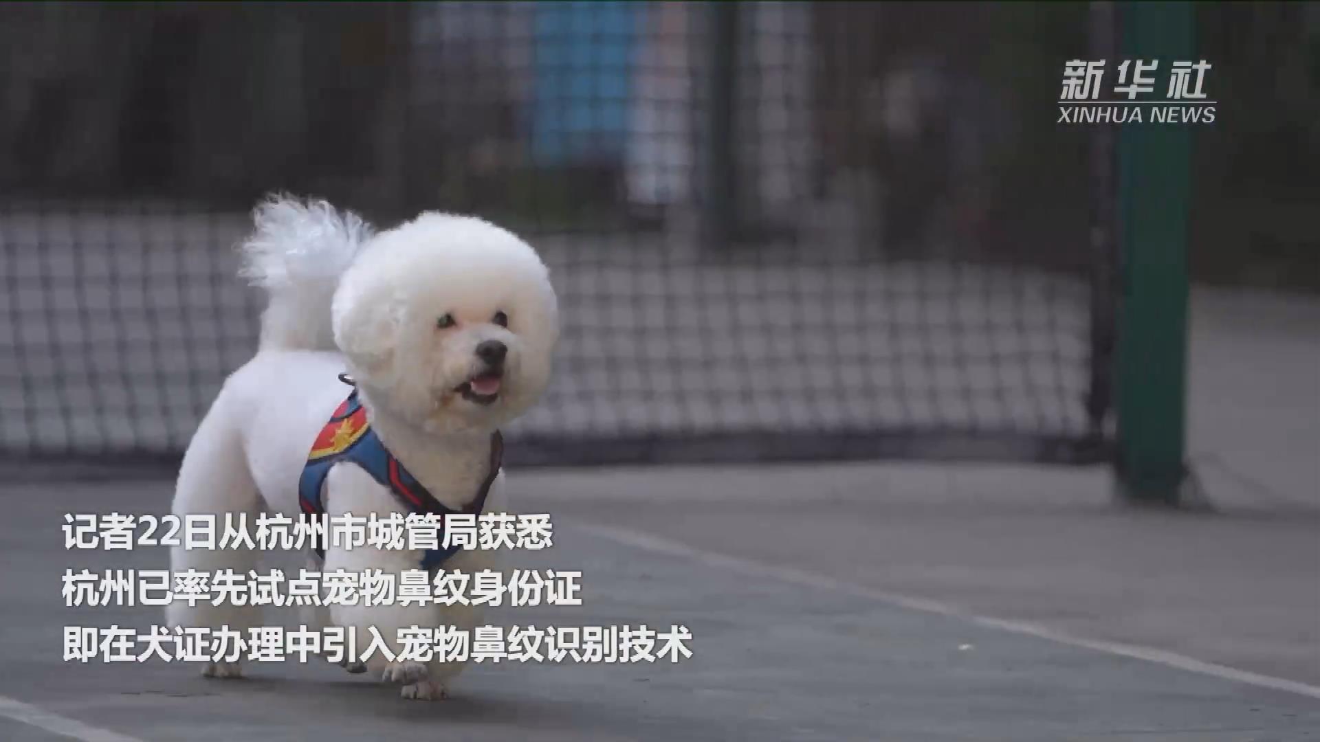 杭州率先试点宠物鼻纹身份证 实现宠物数字化管理