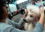 日內瓦:狗狗選秀