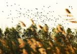 姜山濕地成候鳥越冬天堂